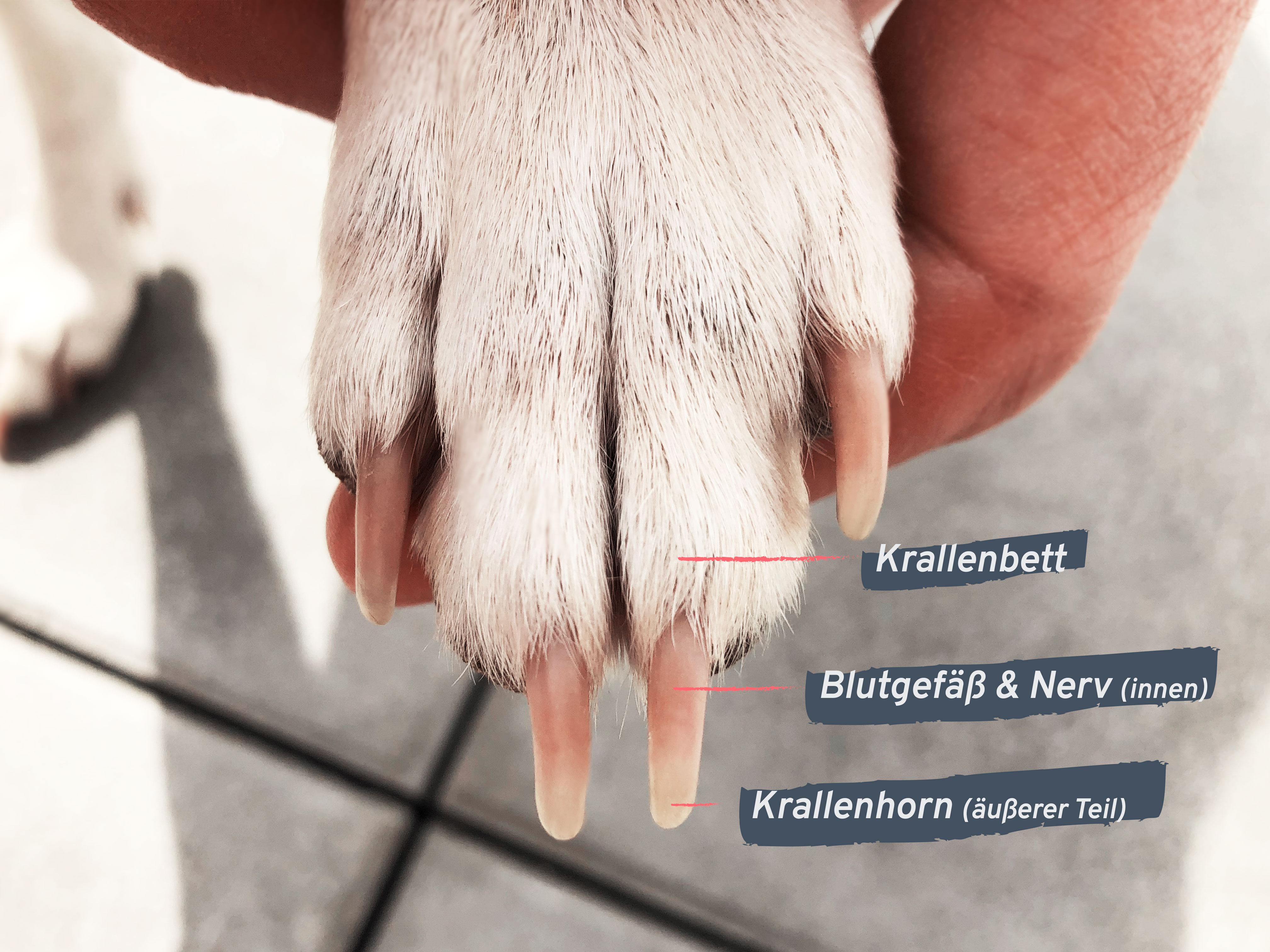 erste hilfe bei einer krallenverletzung vom hund isle of dogs. Black Bedroom Furniture Sets. Home Design Ideas