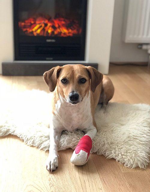 Hund verletzt