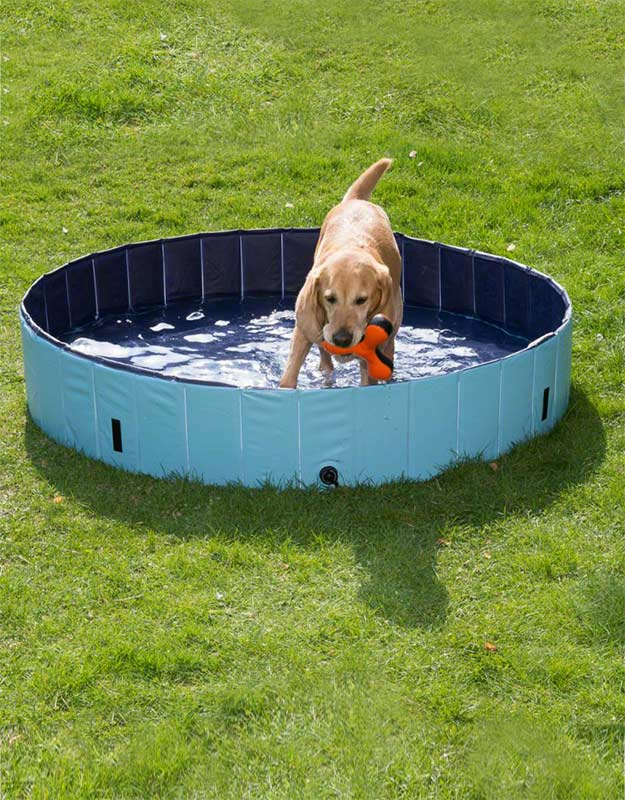 dog pool keep cool isle of dogs. Black Bedroom Furniture Sets. Home Design Ideas