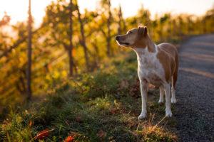 Fit mit Hund durch die kalte Jahreszeit