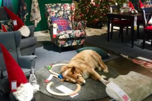 Hund liegt auf Boden in Möbelhaus Ikea