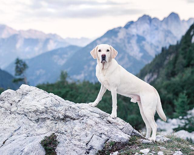 Titelbild: isle of dogs Benefizkalender 2019 zugunsten VITA e.V. Assistenzhunde