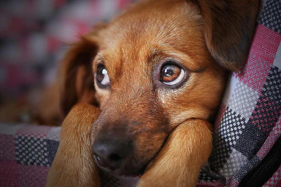 Farbwahrnehmung beim Hund