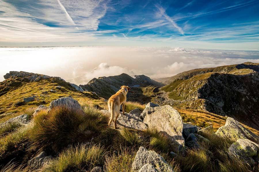 Neujahrsvorsätze für Hund und Halter
