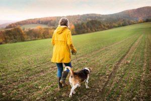 Brut- und Setzzeit - Beagle