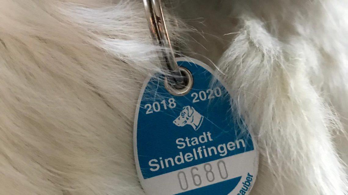 Nahaufnahme eines Hundehalsbandes mit einer Hundemarke
