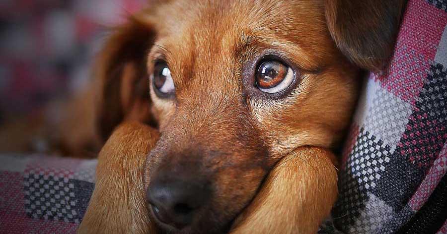 Nahaufnahme eines Hundes