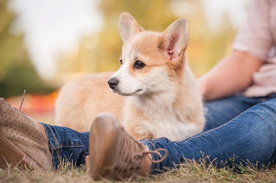 Diese Fragen solltest du dir vor dem Hundekauf stellen...