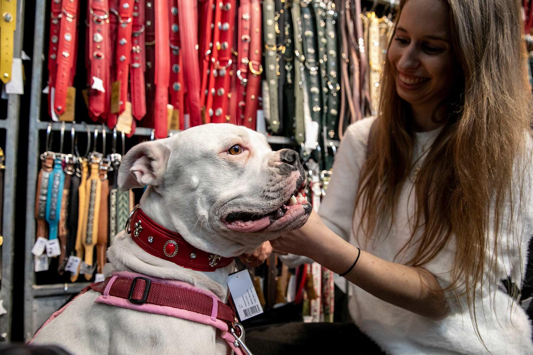 Frau zieht Hund Halsband an